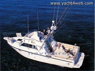 Rio Yachts 900 fish